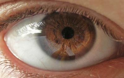 Зрительный нерв - строение и функции
