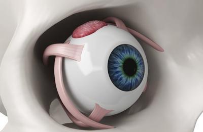 Цилиарное тело глаза - строение и функции