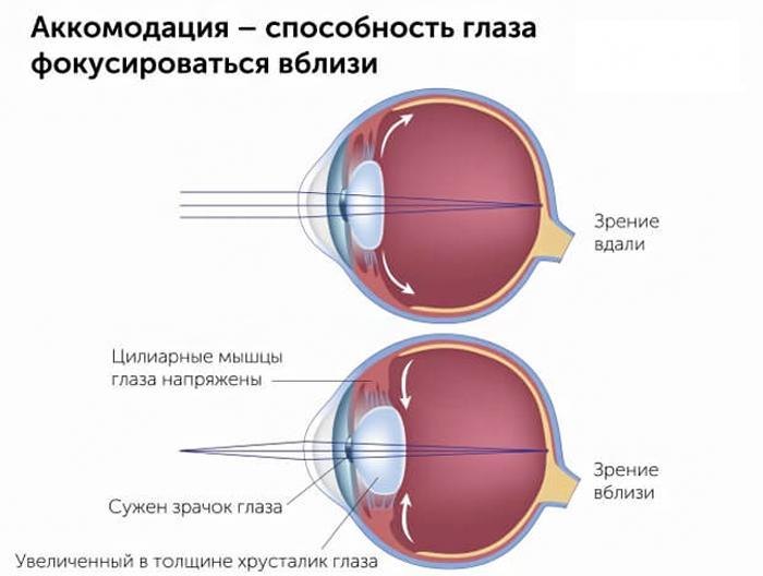 Что такое аккомодация глаза