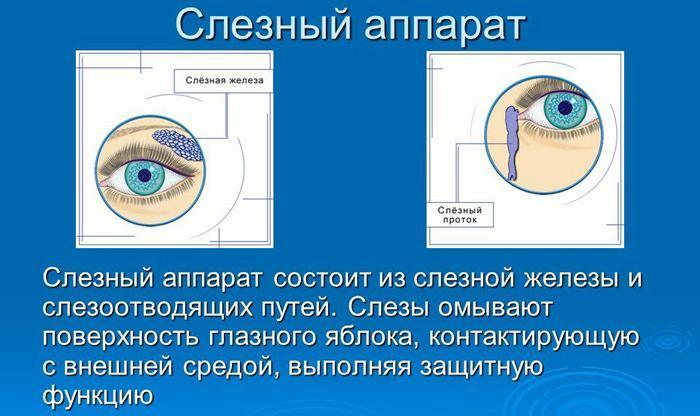 Как работает слезный аппарат