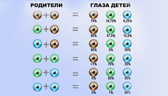 Как определить цвет глаз будущего ребенка
