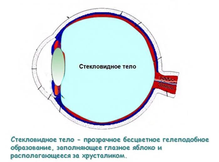 Что такое стекловидное тело глаза