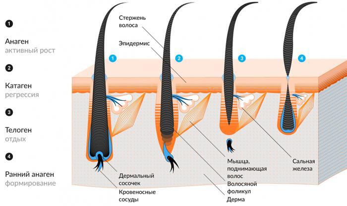 Гипотрихоз ресниц