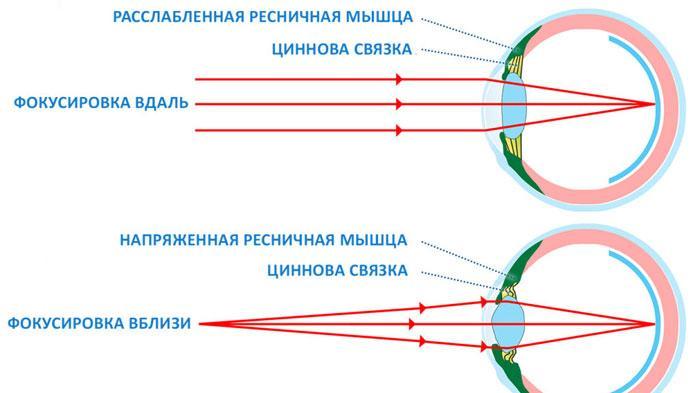 Схема аккомодации глаза